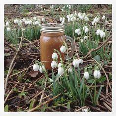 #Saftfasten Tag 30  #Gemüsesaft und #Schneeglöckchen  I took my #greenjuice photo in the garden. Some #snowdrops in the north of #germany