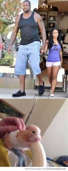 Shaq's girlfriend be like... Hahahahahahahaha! Too funny not to pin