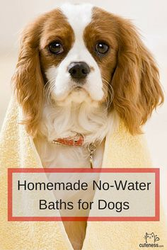 Does your dirty dog hate baths? No problem! Clean him or her with these DIY no-water baths.