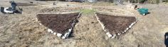 1 Dec. 2013 - Another productive Sunday at Peace Temple Community Garden. Sheet mulched 1/3 of the peace sign, turned and added to the compost pile and planted organic non-gmo rye. Thanks Karin and Barbara!