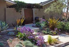 Blue Agaves agree with the Fescue, bronze Phormiums to contrast, Orange-flowered Anigozanthos along the front path complement the purple-blues of Limonium perezii, prostrate Rosemary, and Lavenders. Garden Landscape Design, Garden Landscaping, Blue Fescue, Front Path, Front Courtyard, Garden Inspiration, Garden Ideas, Orange Flowers, Exterior Paint