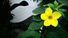 Yellow joy!