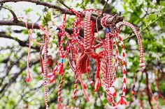 Martenitsa tree.    The tradition is one to wear a martenica until one sees a stork, or a tree with new leaves, and hang it on the tree, so one's luck hold during the whole year.      The red - the color of blood - represents life; and white, the color of a white dove - represents peace.