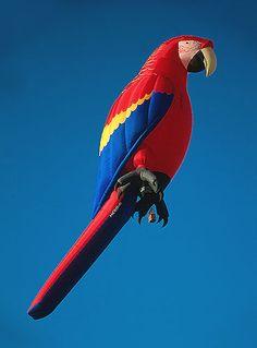 Macaw. hot air balloon