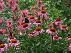 Bienen brauchen Nahrung! Honigbienen und unsere einheimischen Wildbienen sindaufblütenreiche Landschaften und Gärten angewiesen. Doch gerade die Blüten sind verschwunden und mit ihnen…