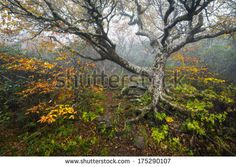 Craggy Stock Photos, Royalty-Free Images & Vectors - Shutterstock