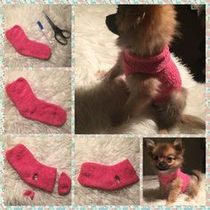 How to make a sweater for your puppy out of a sock!