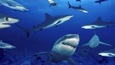 Frasi sugli squali Colorful Fish, Tropical Fish, Dangerous Fish, Cool Sharks, Whale Sharks, Smile Images, Twitter Image, The Great White, African Cichlids