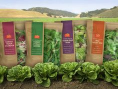 Fresh Express: Artisan-Style Salad Line. Packaging designed by McLean Design Salad Packaging, Food Packaging Design, Brand Packaging, Agriculture, Vegetable Packaging, Harvest Market, Fruit And Vegetable Storage, Organic Packaging, Cookies Et Biscuits