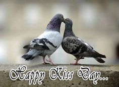Happy Kiss Day, Happy Sunday, Funny Animal Pictures, Funny Animals, Animal Pics, Valentines Weekend, Beautiful Nature Wallpaper, Beautiful Girl Indian, 2017 Photos