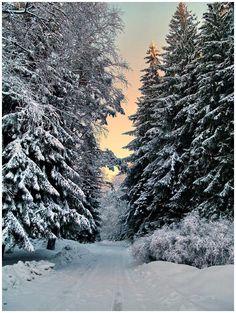 Vitosha Mountain, Vitosha , Bulgaria Copyright: Anton Lefterov