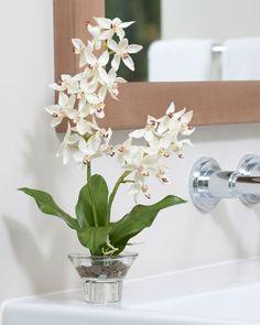 shop exotic silk orchid u0026 plants at petals - Silk Orchids