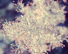 texture, fleurs, roses et blanches