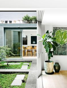 """A serene internal courtyard is directly connected to the home's social spaces. The green covered pond meshes visually with a Japanese maple and botanical artwork inside. **Planter** from [Orson & Blake](http://www.orsonandblake.com.au/