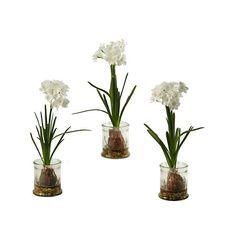 Paperwhite Arrangement in Glass Planters, Set of 3 | Kirklands
