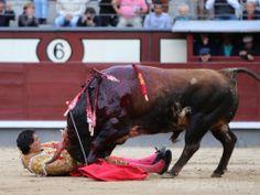 スペイン・マドリード(Madrid)のラス・ベンタス(Las Ventas)闘牛場で行われたサン・イシドロ(San Isidro)闘牛祭の興業で3番目に登場し、牛に角で突かれる闘牛士(2014年5月20日撮影)。(c)AFP ▼22May2014AFP マドリードで闘牛士3人負傷、35年ぶり興行中断 http://www.afpbb.com/articles/-/3015600 #Las_Ventas #Plaza_de_Toros #Bullring #Arene #Stierkampfarena #Praca_de_touros #Arena_walk_bykow #David_Mora #Madrid