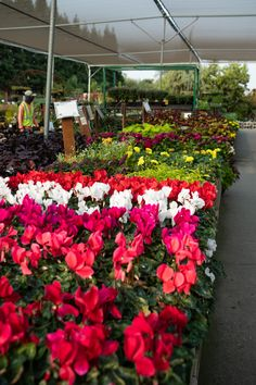 Extension Office, Fall Planting, Citrus Heights, Elk Grove, Shade Plants, Early Spring, Perennials, Bloom, Nursery