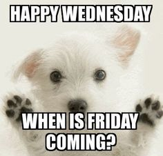 Happy Wednesday! When is Friday coming? #Humpdaymemes #Funnyhumpdaymemes #Wednesdaymemes #Wednesdaymeme #Funnywednesdaymemes #Wednesdaymemesforwork #Wednesdayworkmemes #Wednesdaymorningmemes #Funnywednesdayimages #Funnywednesdayquotes #Happywednesdaymemes #Wednesdaymemescute #Wednesdaymemespositive #Wednesdaymemesanimals #Wednesdayevememes #Memes #Funnymemes #Memes2020 #Wednesdaysmeme #Bestwednesdaymemes #Funnyquotes #Sarcasticquotes #Hilariousquotes #Humorousquotes #Wittyquotes…