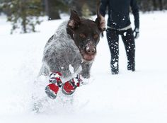 Ruffwear Polar Trex™ Winter Dog Boots http://www.ruffwear.com/Barkn-Boots-Polar-Trex?sc=2&category=11