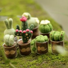 cactus craft Decorate your space with eight relaxing and healing cactus plants. This is an unfinished, DIY craft kit that requires your assembly (needle felting). *US customers: For a sm Needle Felting Kits, Wet Felting, Felt Crafts, Diy And Crafts, Cactus Craft, Felt Succulents, Mini Plants, Cactus Plants, Succulent Plants