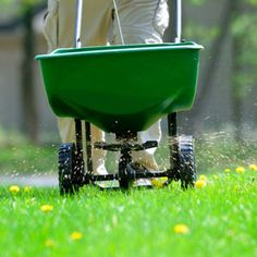 Go Green ~ Use sugar to make your lawn healthy and at the same time eliminate crabgrass, Bermuda grass, dandelions, clover, dollar weed and other shallow rooted weeds like chickweed.