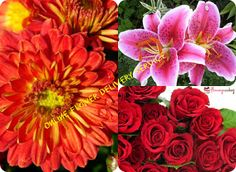 From birthday to farewell to get-well-soon wishes there's nothing that can express your feelings better than a nice bouquet of flowers . Buy Flowers Online, Flower Delivery, Meant To Be, Bouquet, France, Rose, Birthday, Plants, Stuff To Buy