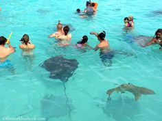 Snorkeling with Sharks and Stingrays in Moorea - The World Is A Book