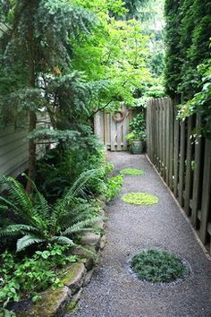 """Narrow side yard features a gravel path with inlaid """"stepping stones"""" made of metal circles embedded in the gravel and ringed with Mexican black pebbles. Inside the stepping stones are plantings of dwarf mondo grass, 'Sunshine' creeping veronica, and Corsican mint. Plantings include natives such as evergreen huckleberry, mountain hemlock, sword fern, and deer ferns."""