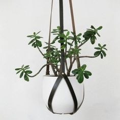 For your inspiration take a look gallery of lovely hanging plant hangers that we collect for you.Decorative flower pots made of different materials, shapes and colors will highlight the beauty of your plants and decorate your home.