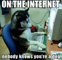 Dog on the internet.