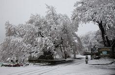 延命地蔵堂の桜 4/21(満開) Snow, Outdoor, Outdoors, Outdoor Games, The Great Outdoors, Eyes, Let It Snow
