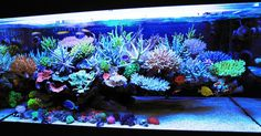 What no algae or phosphate blooms.... You definitely need Agent Green from www.acrylictankmanufacturing.com.au
