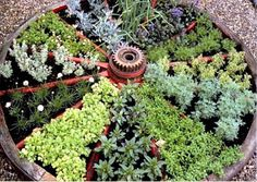 What a great idea.  Fill a wagon wheel with your favourite herbs.  Get details now.