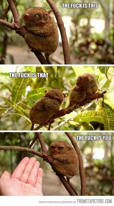 Don't know why i find this so funny