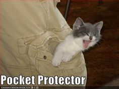 Farker Gremlin Shared This Photo Of A Pocket Protector In The Latest Fark Caturday Thread Petit