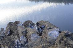 Kameny na lavičkách Tom Jazzbend