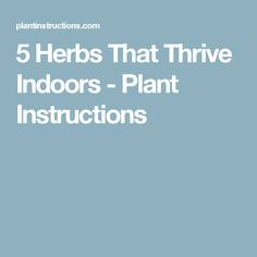 5 Herbs That Thrive Indoors - Plant Instructions