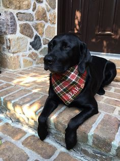 Your place to buy and sell all things handmade Black Labrador Dog, Black Lab Puppies, Cute Puppies, Cute Dogs, Dogs And Puppies, Doggies, Black Labrador Retriever, Corgi Puppies, Retriever Dog
