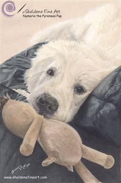 Coloured Pencil Drawing of Nymeria the Pyrenees Pup. https://sheldenefineart.com/