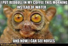 coffee zombie memes | Bush Baby bugging out: I put Redbull in my coffee this morning instead ...