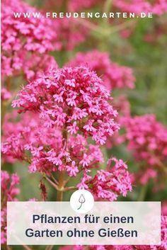 Ideen für einen Garten mit Pflanzen, die du nicht gießen musst. #Garten #pflegeleicht #garden #Gartenidee #pflanzen