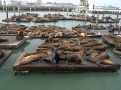 Sea Lions at Fisherman's Wharf in San Fran... I love SF and want to go back.