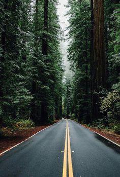 Via Venustas     Reminds me a lot of Route 101 in Oregon