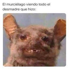 Funny Spanish Memes, Spanish Humor, Funny Memes, Cute Anime Chibi, New Memes, Morning Humor, Laughing So Hard, Akira, My Little Pony