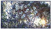Moving Toward the Light II - watercolor on paper 222.3 x 124.5 cm - 87.50 x 49.00 in. by Joseph Raffael | 2015