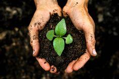 Potgrond, stekgrond, tuinaarde - als enthousiast tuinier haal jij misschien ook elk jaar weer wat zakken bij het tuincentrum. Belangrijkste ingrediënt: turf uit natuurgebieden. Dat kan milieuvriendelijker en goedkoper. Veel tuiniers maken hun eigen potgrond. Zeker als je zelf composteert, is dat een logische volgende stap.