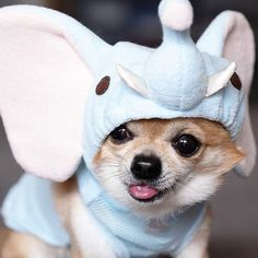 Look! I'm an elephant!