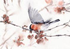 Watercolor Print Bullfinch Bird: modern loose design. Wall