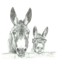 donkey illustrations drawing - Google Search