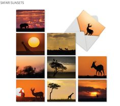 NobleWorks cards: Safari Sunsets, images by Susan Portnoy